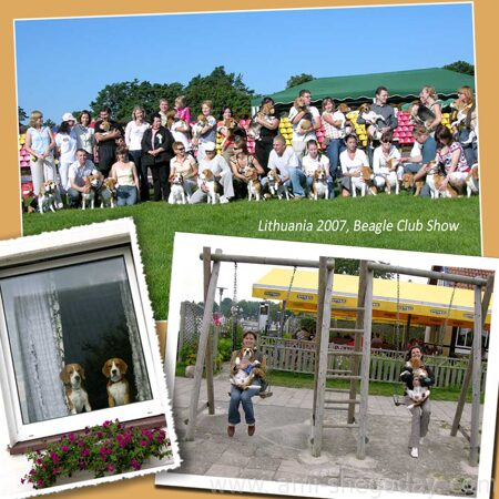 ami-shegoday_in_lithuania_2007_beagle_club_show